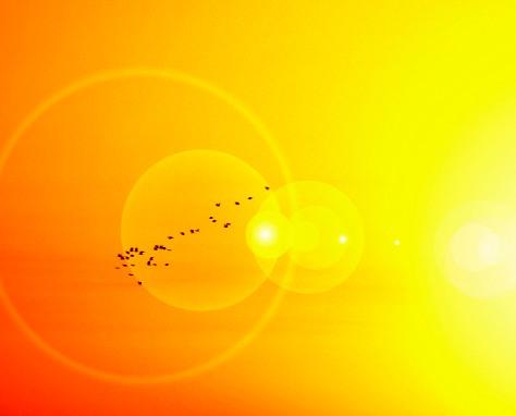 Sunupbirdsflare